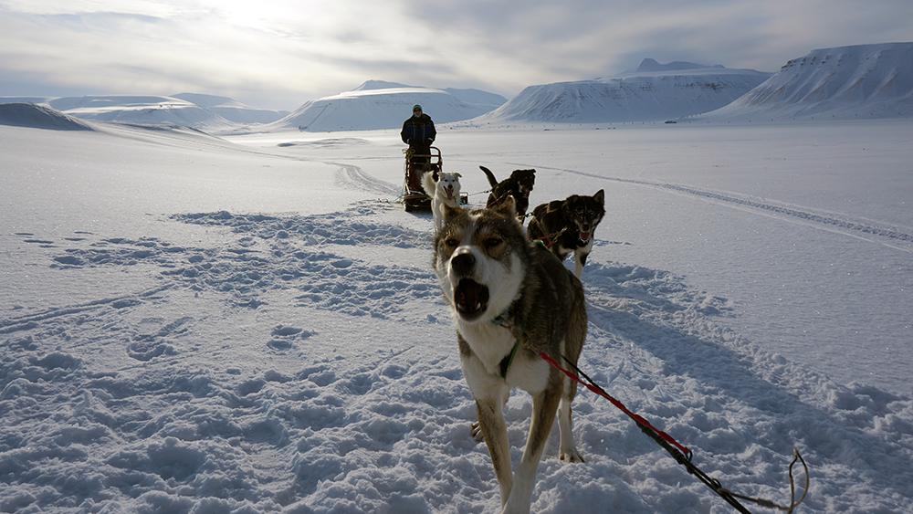Hundeschlittentouren