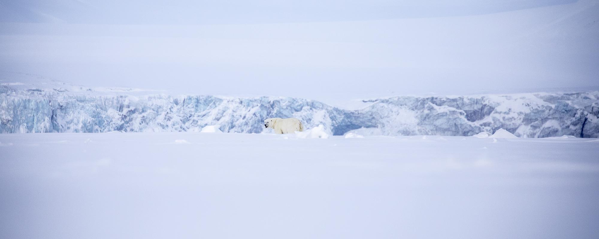 Eisbär an der Ostküste von Spitzbergen