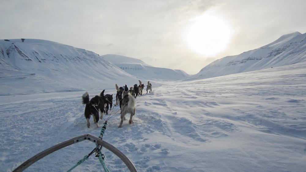 Hundeschlitten tour auf Spitzbergen
