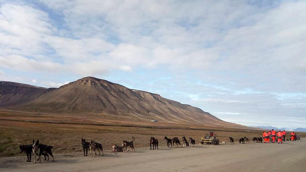 Schlittenhunden Touren auf Spitzbergen