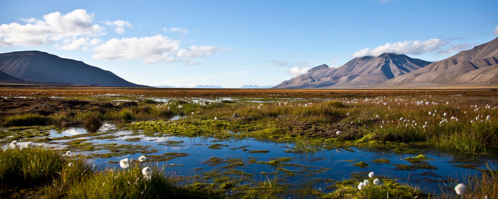 Adventfjord bei Longyearbyen im Sommer