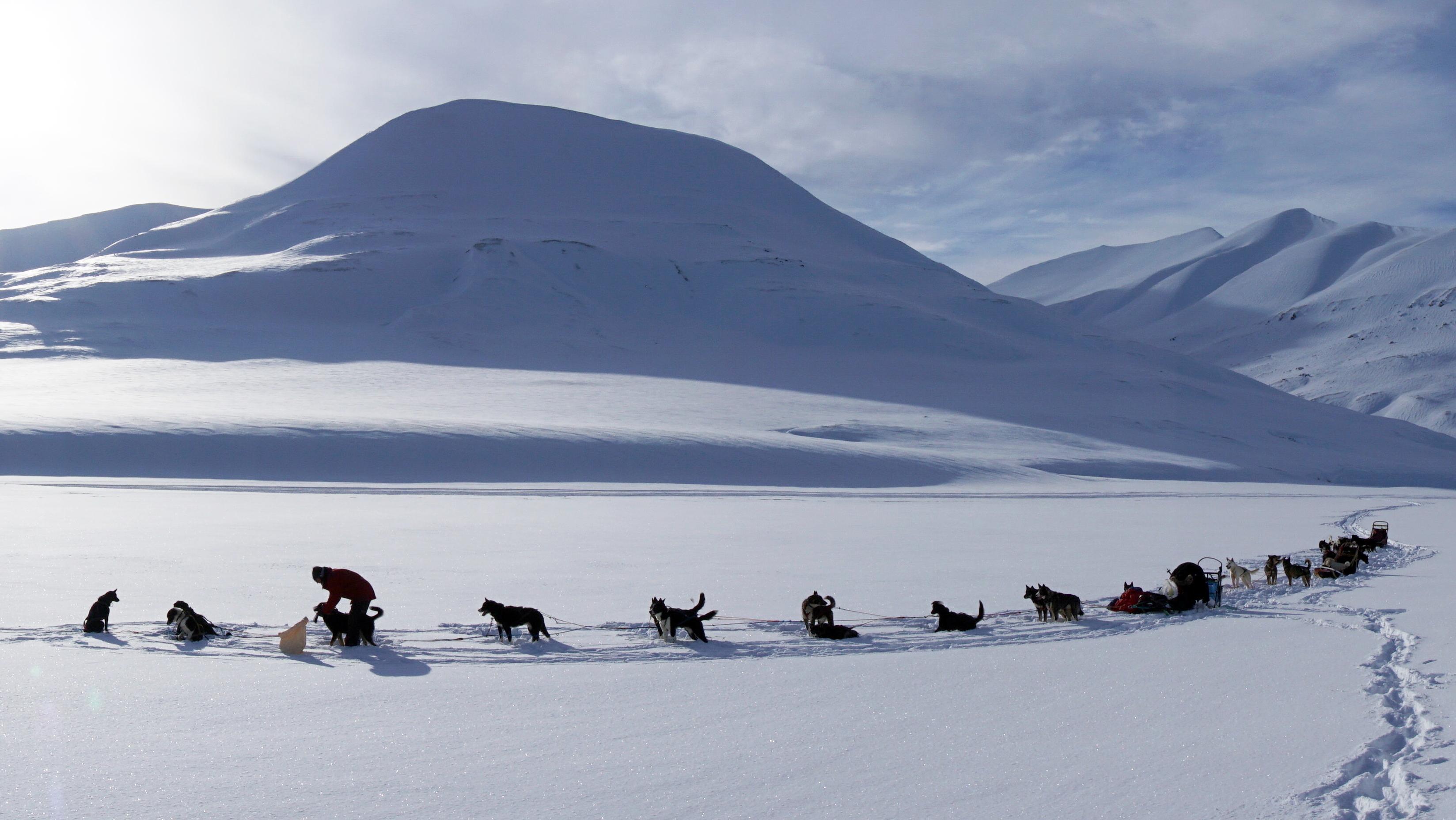 Huskies auf Spitzbergen